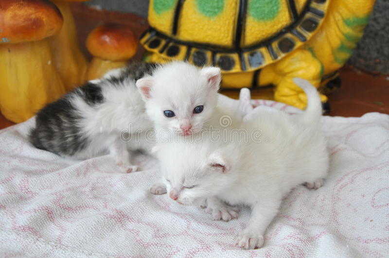 Newborn kittens royalty free stock photos