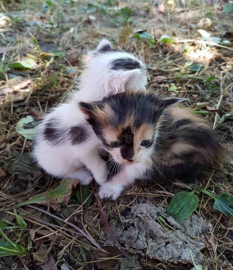 Newborn kittens. Pets. stock photography
