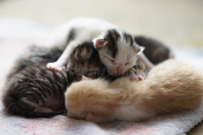 Newborn kittens sleeping, cute baby animals sleep stock photography