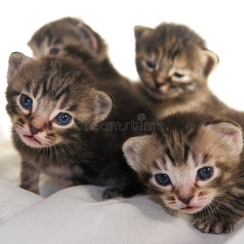 Newborn kittens on white background stock photos
