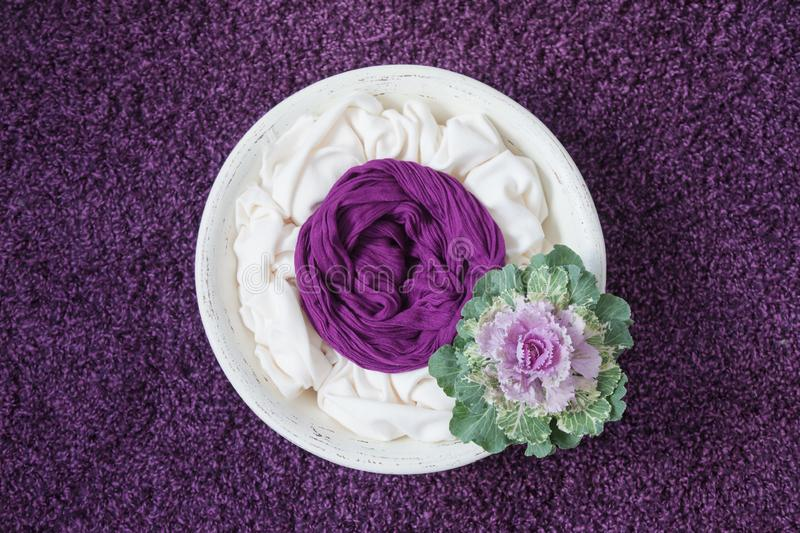 Newborn photography props white wooden bowl with decorative cabbage on a purple background. Purple mood royalty free stock photos