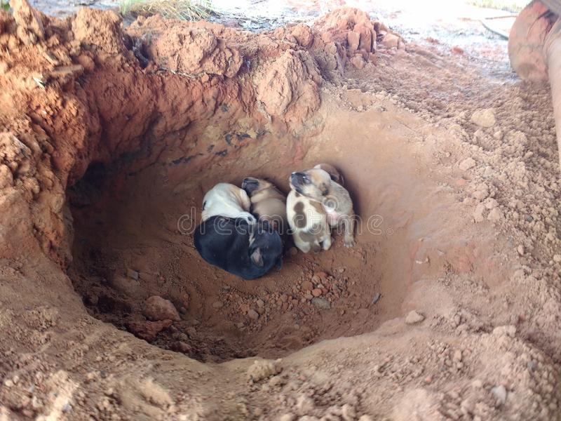 Newborn puppies in their burrow stock image