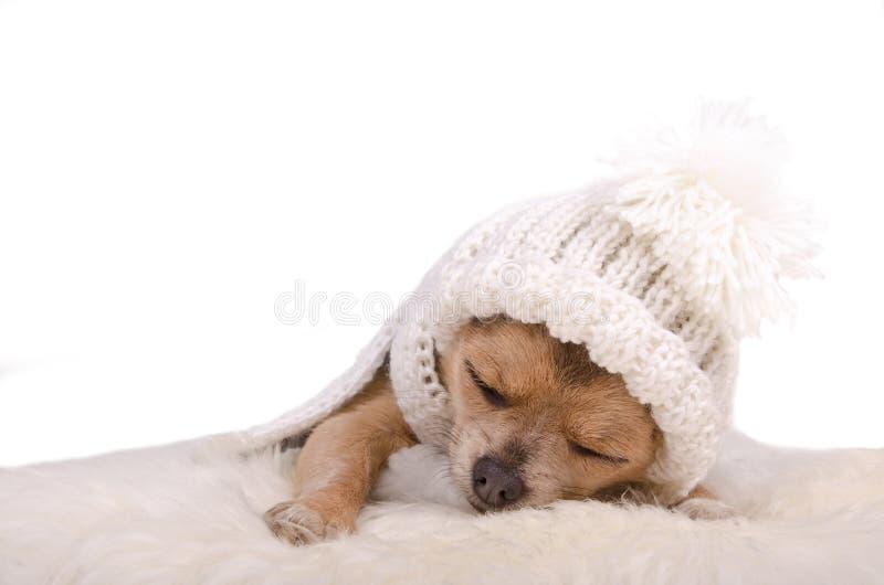 Newborn puppy sleeping on white fluffy fur royalty free stock photos