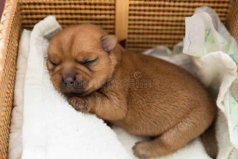 Newborn puppy stock image