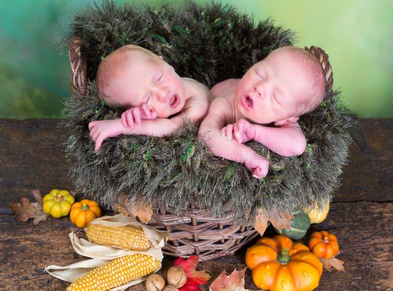 Newborn twins in autumn basket stock photos