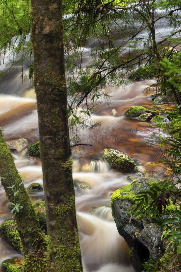 Newell Creek in Tasmania royalty free stock photos