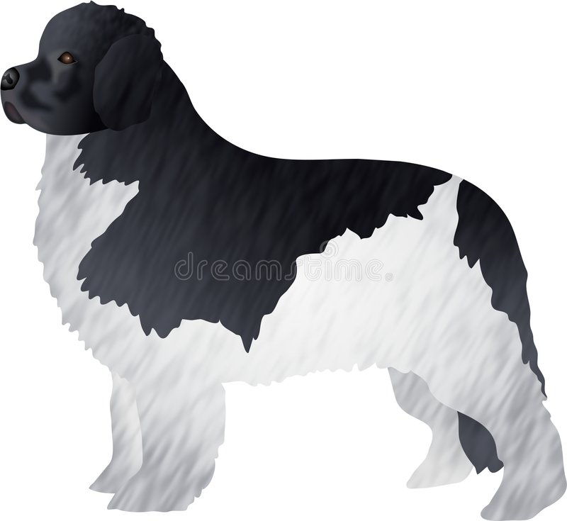 Download Newfoundland stock illustration. Image of clipart, domestic - 81508