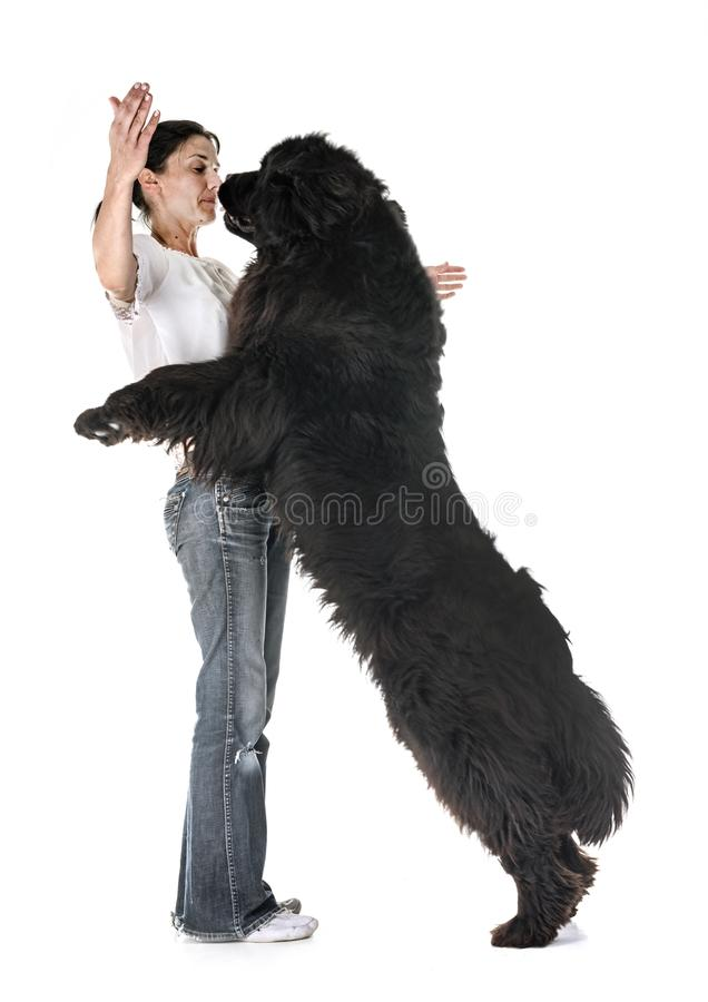 Newfoundland dog and woman royalty free stock images