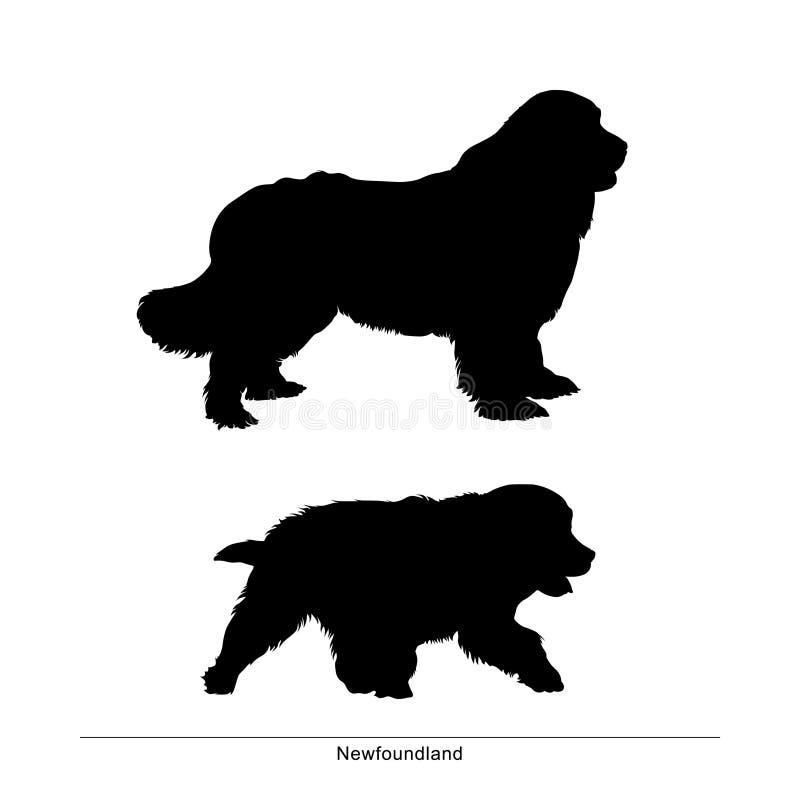 newfoundland O cão é grande e pequeno ilustração royalty free
