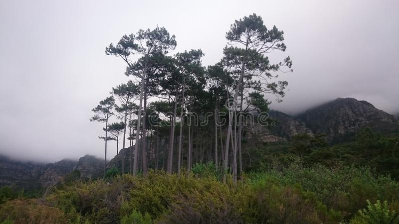 Newlands Forest royalty free stock photos