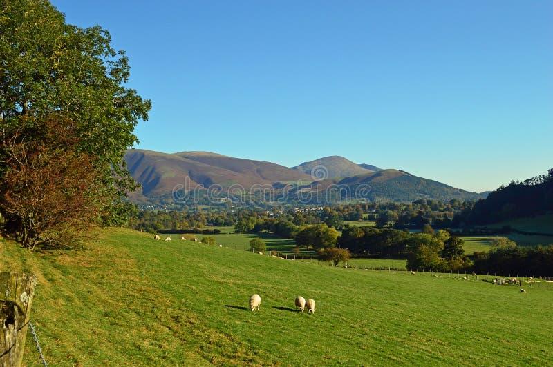 Newlandsvallei aan Skiddaw royalty-vrije stock foto