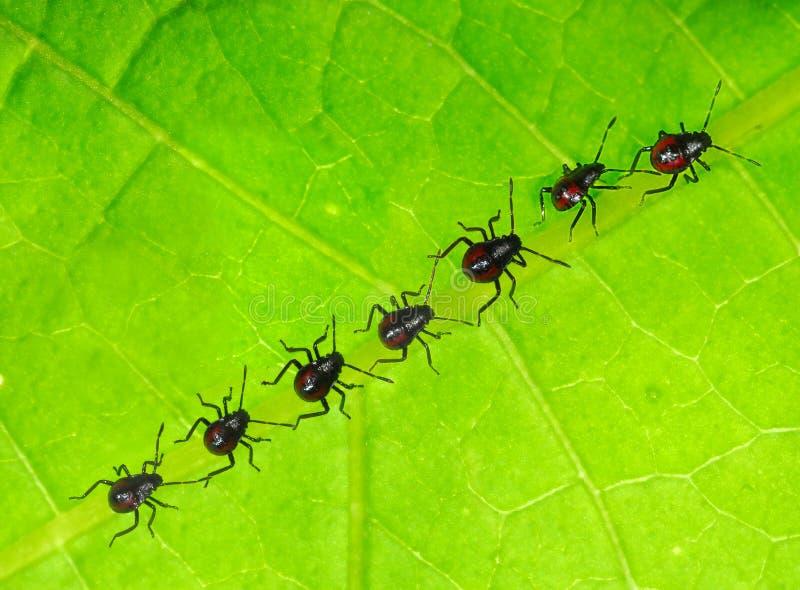 Newly born bugs royalty free stock image