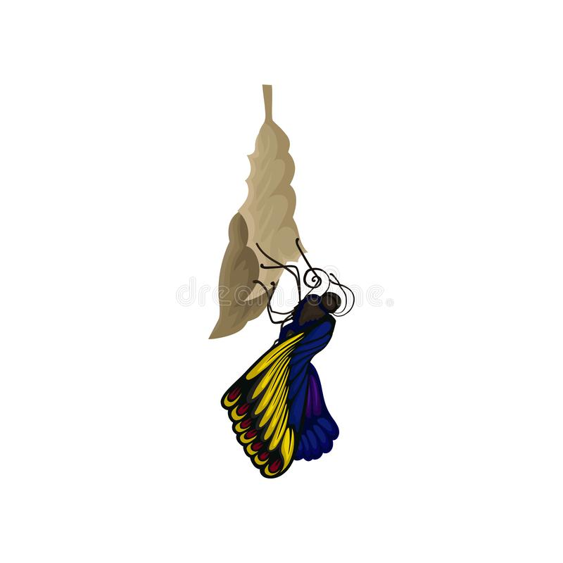 Newly born butterfly on cocoon. Beautiful flying insect with bright blue-yellow wings. Nature theme. Flat vector icon royalty free illustration