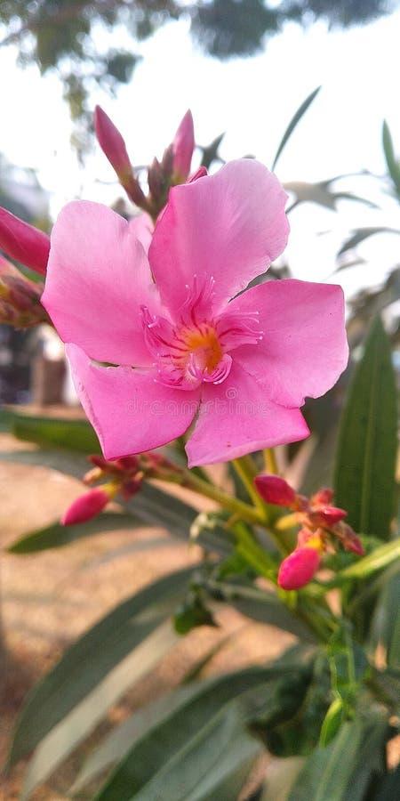 Newly born Flower stock photos