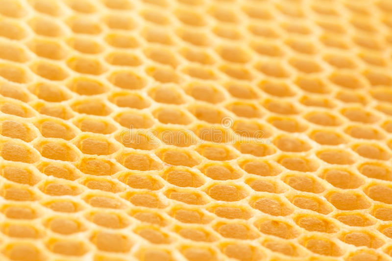 Newly drawn honeycomb. Freshly drawn unused beeswax honeycomb cells drawn on plastic foundation. Low angle photograph with limited focal plane royalty free stock image