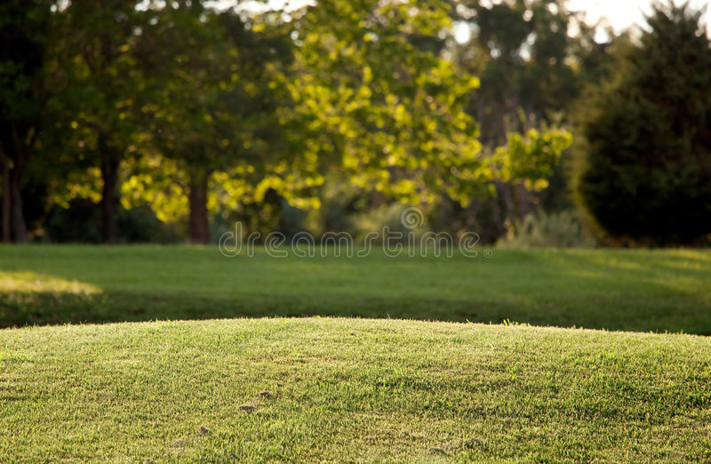 Newly mown lawn stock photo