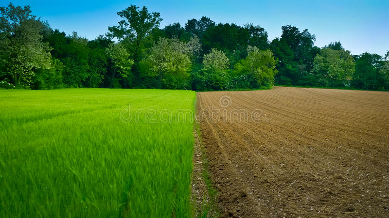 Half and Half Wheat Field royalty free stock images