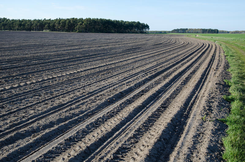 Download Newly sowed corn field stock image. Image of landscaped - 71470263