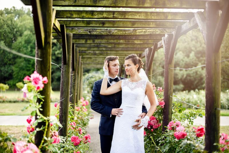 Newlyweds στο rosarium πάρκων δίπλα στα όμορφα ρόδινα τριαντάφυλλα στοκ εικόνα με δικαίωμα ελεύθερης χρήσης