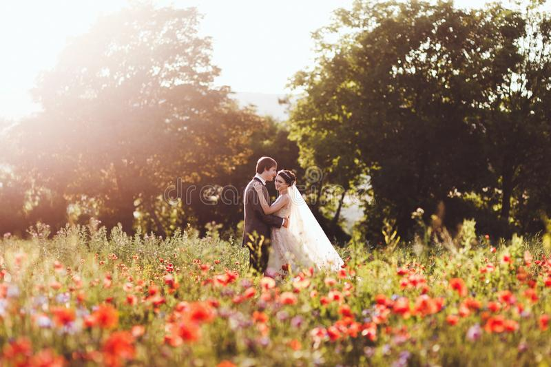 Newlyweds couple walking in amazing blossoming flowers field. Newlyweds couple walking in amazing blossoming poppy flowers field. Scope and panoramic views royalty free stock image