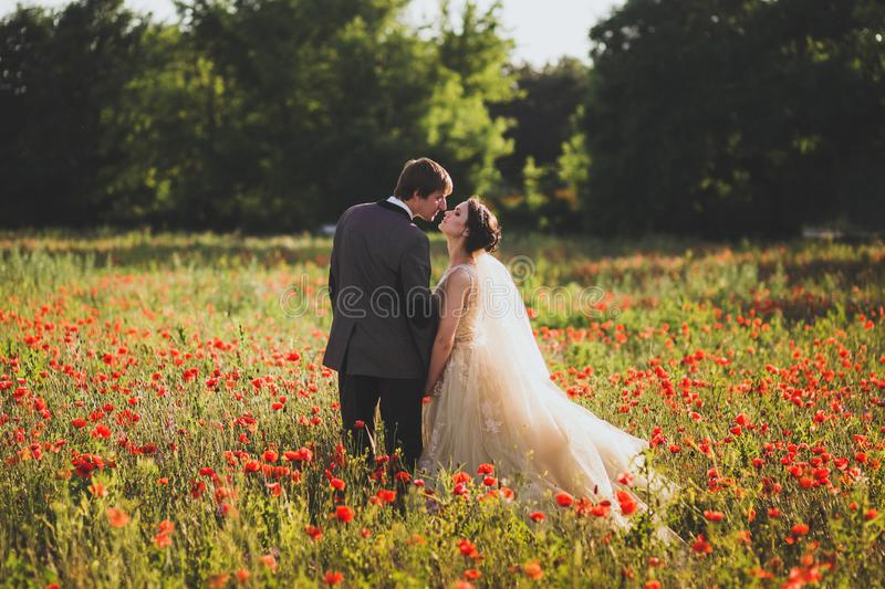 Newlyweds couple walking in amazing blossoming flowers field royalty free stock images