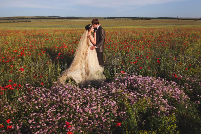 Newlyweds couple walking in amazing blossoming flowers field royalty free stock image