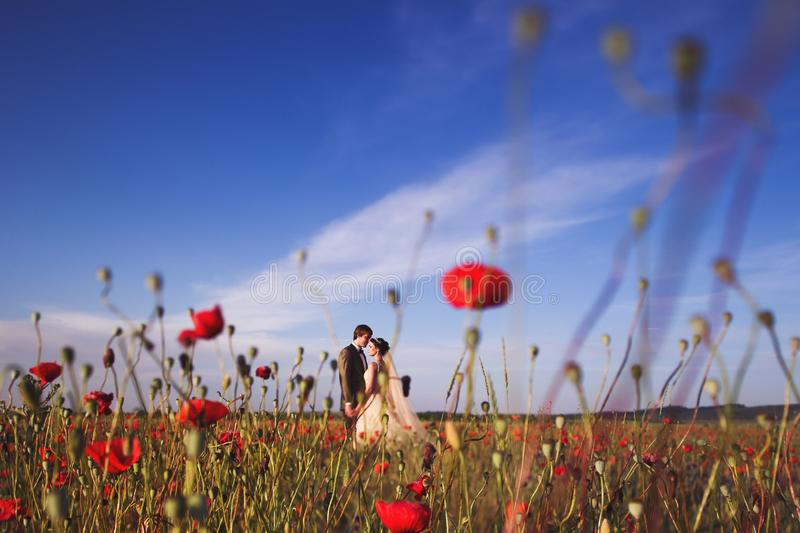 Newlyweds couple walking in amazing blossoming flowers field. Newlyweds couple walking in amazing blossoming poppy flowers field. Scope and panoramic views royalty free stock images