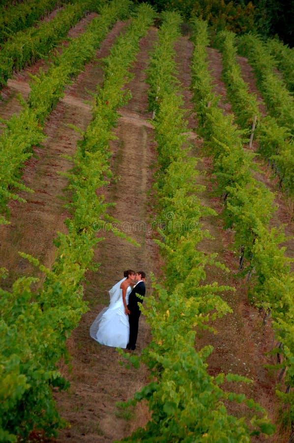Newlyweds em um vinhedo imagem de stock