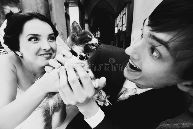 Newlyweds grimace playing with a kitty royalty free stock photo