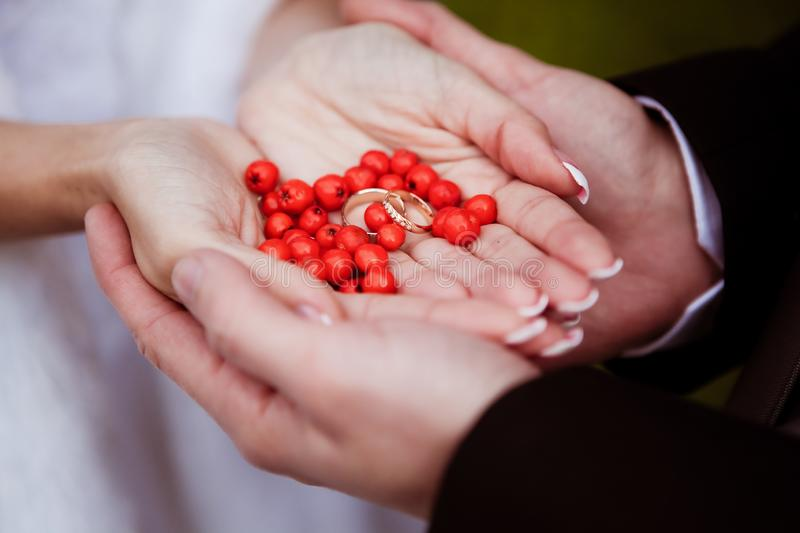 Newlyweds hold wedding rings and red berries in the palms of their hands stock photography