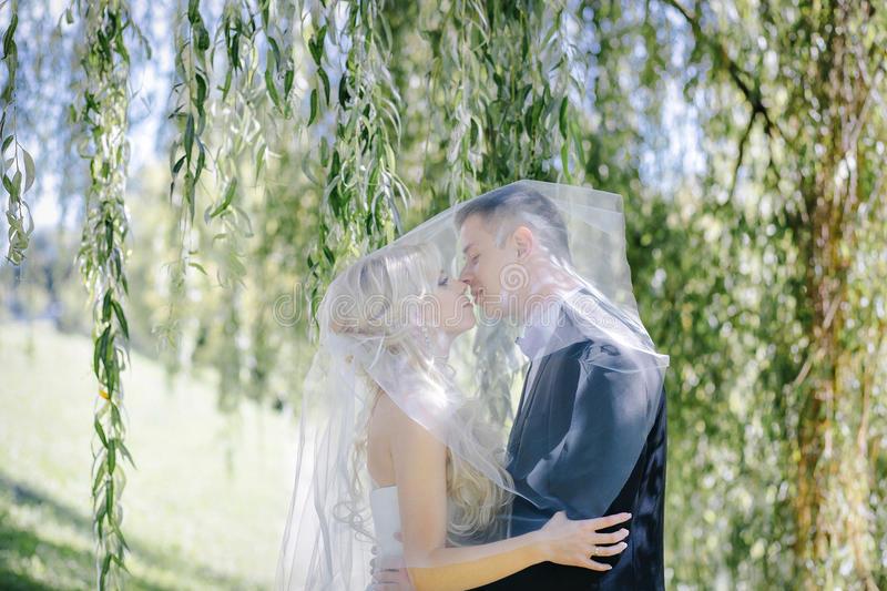 Newlyweds kiss under a veil on background willow stock photography