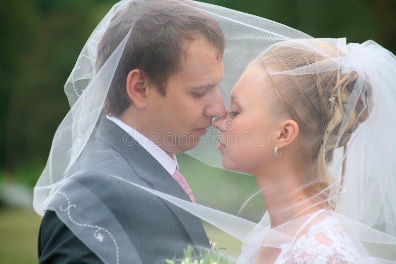 Newlyweds under a veil stock photo