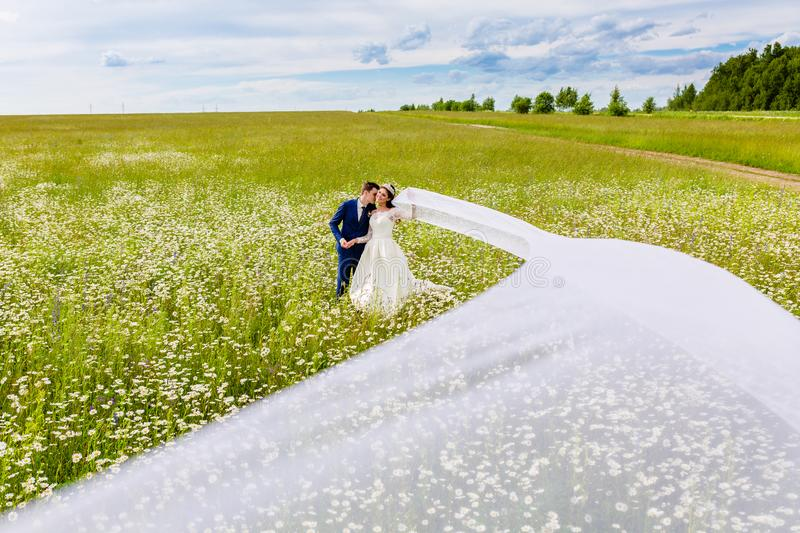 Newlyweds with very long bridal veil. Beautiful couple newlyweds in a camomile field with very long bridal veil stock photo