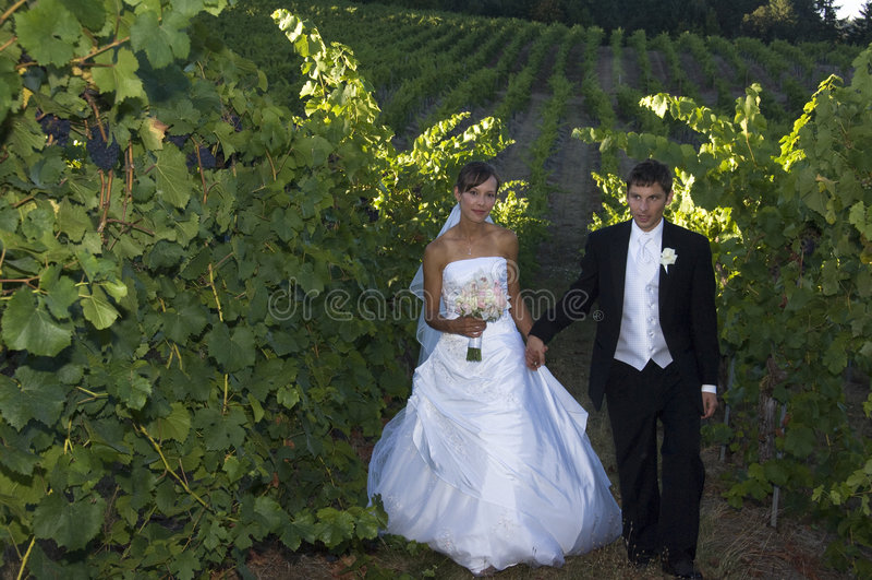 Newlyweds in a vineyard stock photo