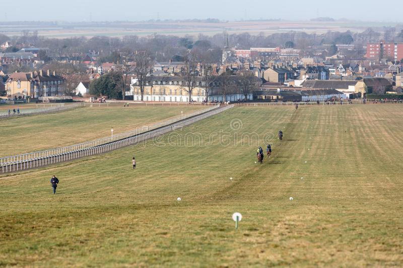 Newmarket Gallops Racehorse Training royalty free stock photography