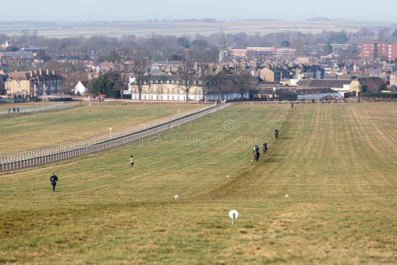 Newmarket galopa el entrenamiento del caballo de carreras fotografía de archivo libre de regalías