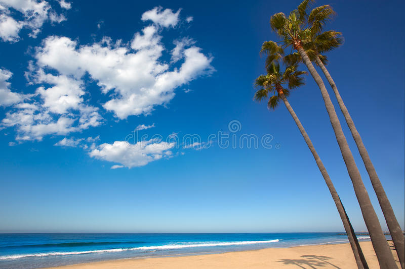 Download Newport Beach California Palm Trees On Shore Stock Photo - Image: 33854690