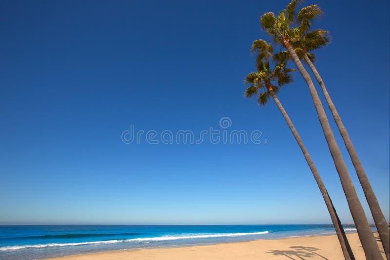 Newport Beach California Palm Trees On Shore Royalty Free Stock Photography