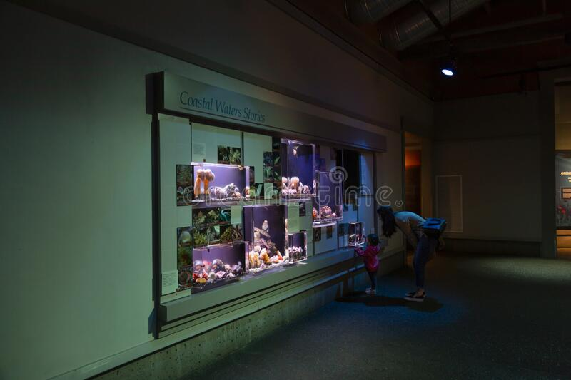 Newport, Oregon / USA - January 21, 2019:  A mother and daughter view a wall of small sea creature exhibit tanks at the Oregon Coa stock photography