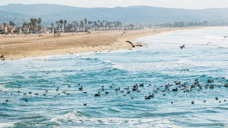 Newport-Strand Kalifornien 2 stockfotos