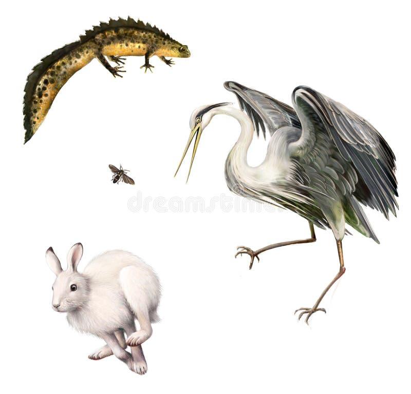 Newt, liebre, mosca, garza gris stock de ilustración