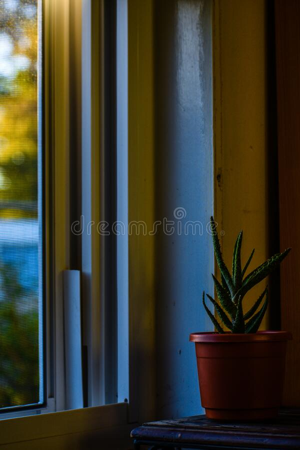 A Cozy Cool Afternoon Cactus royalty free stock image