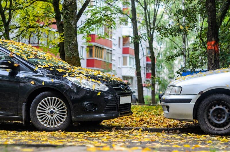 Nez de support de deux voitures à flairer dans des feuilles tombées image libre de droits