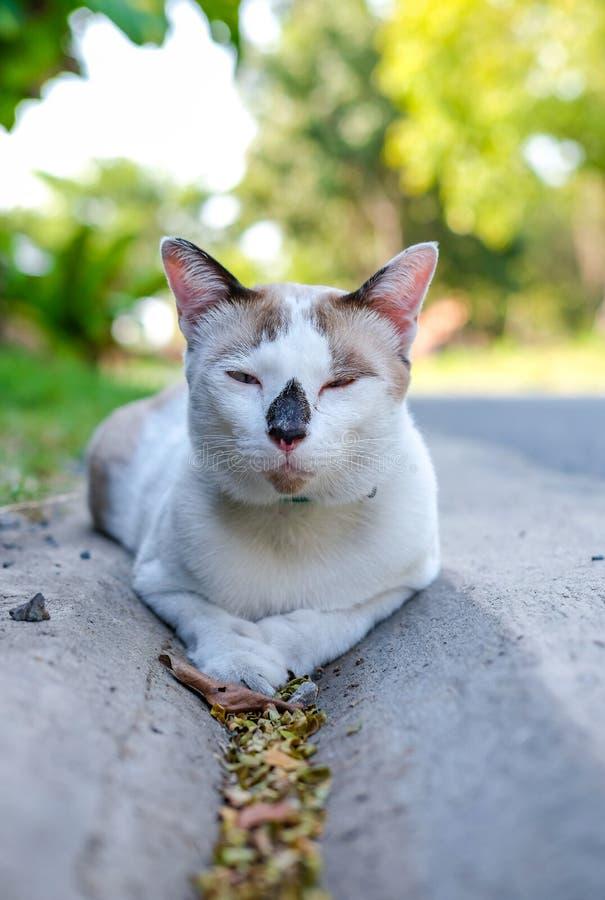 Nez noir sur belle Cat Relaxing On Roadside photo libre de droits