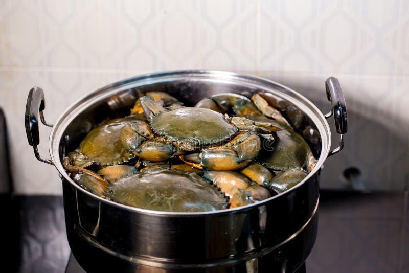 ?ngad krabba i kruka bo krabbor i en kruka E royaltyfri fotografi