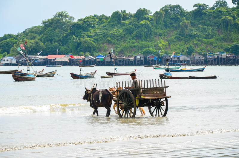 NGAPALI, MYANMAR- SEPTEMBER 25, 2016: Daily life in a fishing village at the Bengal Bay. The Ngapali beach at sunset, when the boats are coming back with the royalty free stock image