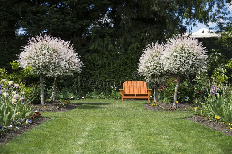 Nglish Style Garden Path of Grass Lined, Mixed Flower Beds, Blooming Salix Integra Trees, and Orange Garden Bench royalty free stock photos