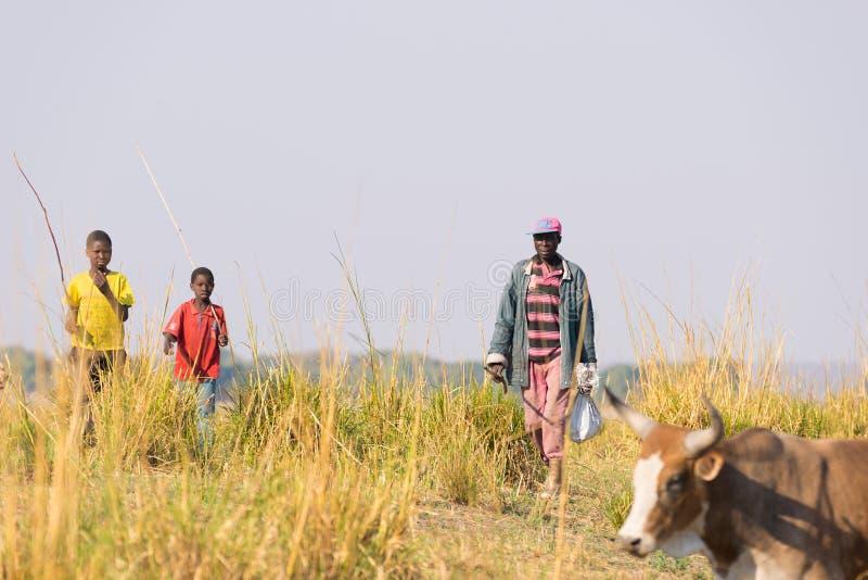 Ngoma Namibia - Augusti 16, 2016: Hårt lantligt liv i den afrikanska savannahen Barn och vuxna herdar i den lantliga Caprivi rems royaltyfria foton