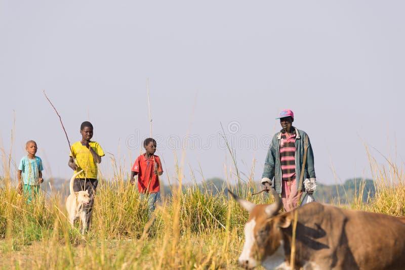 Ngoma Namibia - Augusti 16, 2016: Hårt lantligt liv i den afrikanska savannahen Barn och vuxna herdar i den lantliga Caprivi rems arkivfoton