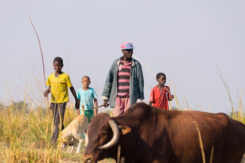 Ngoma Namibia - Augusti 16, 2016: Hårt lantligt liv i den afrikanska savannahen Barn och vuxna herdar i den lantliga Caprivi rems arkivbilder